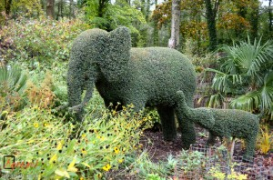 Topiary Elephants