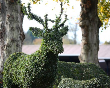 Topiary Stag
