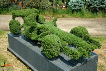 Topiary Formula 1 Race Car crafted from a wireframe covered in Ligustrum delavayanum.