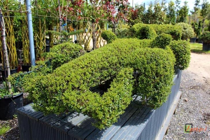 F1 Topiary