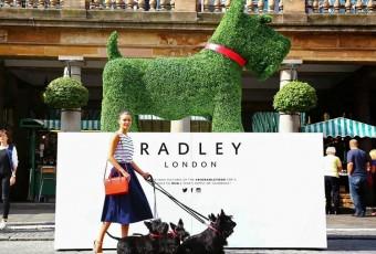 Radley the Dog