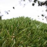 artificialgrass