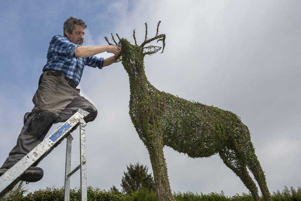 New Forest topiary artist Luigi Frosini adds the finishing touches to a stag.