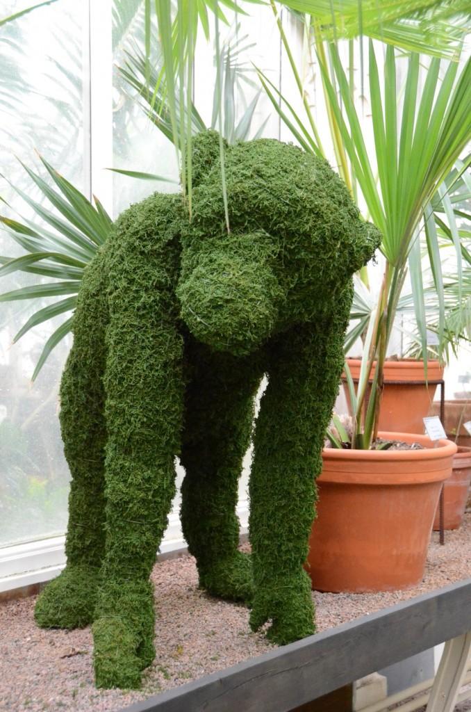 Topiary Chimpanzee in Glasshouse
