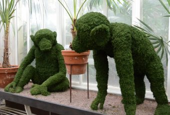 Topiary Chimpanzees for Sweden