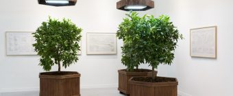 Bespoke planters and topiary lemon trees