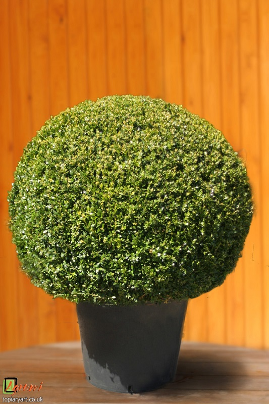 how to make topiary balls
