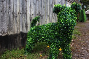 Boxwood Dog